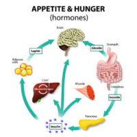 Causes of Increased Hunger Hormones