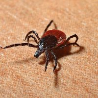 Tickborne Disease in the US